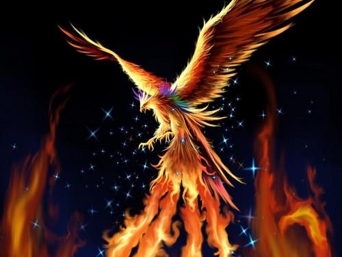 Phoenix-neo-genesis-niurka-2.jpg